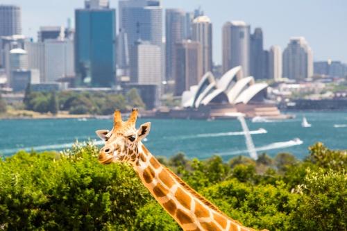 Taronga Zoo, Sydney